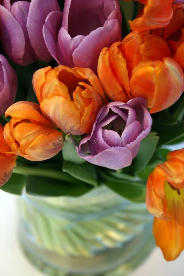 Download Tulipes image stock. Image du frais, lame, pétale, orange - 8669349