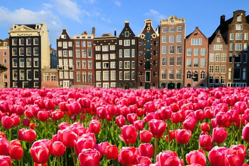 Tulipes avec des maisons de canal d'Amsterdam photos stock