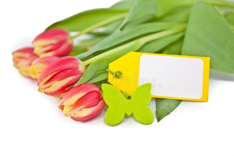 Tulipes avec une carte vierge images libres de droits