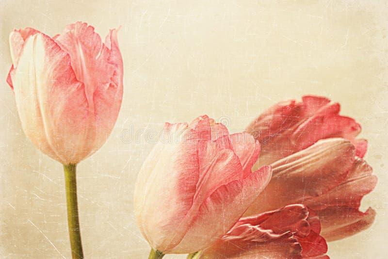 Tulipes avec vieille sensation de cru illustration libre de droits