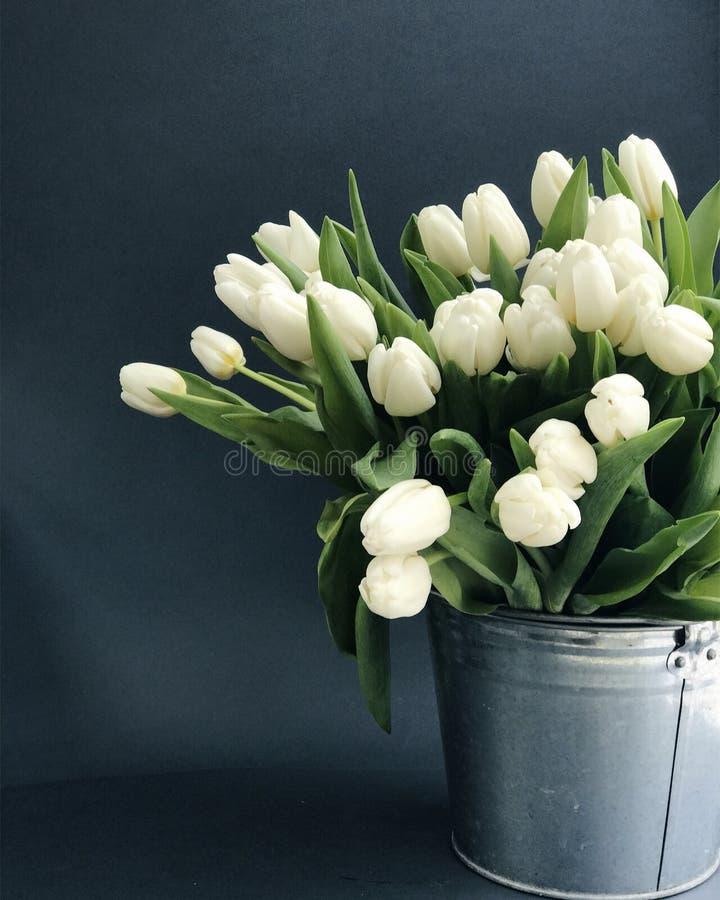 Tulipes blanches dans un seau sur le fond gris photographie stock