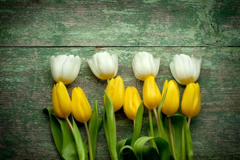 Tulipes blanches et jaunes au-dessus de table en bois minable photos libres de droits