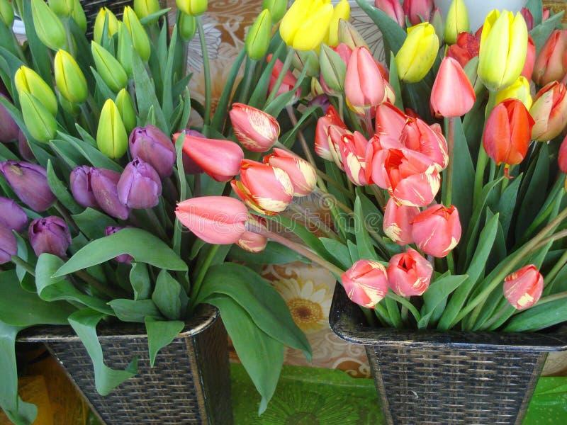 tulipe fleuriste