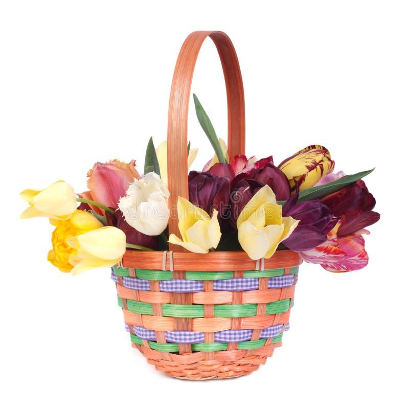 Tulipes colorées dans un panier en osier d'isolement sur le blanc photos libres de droits