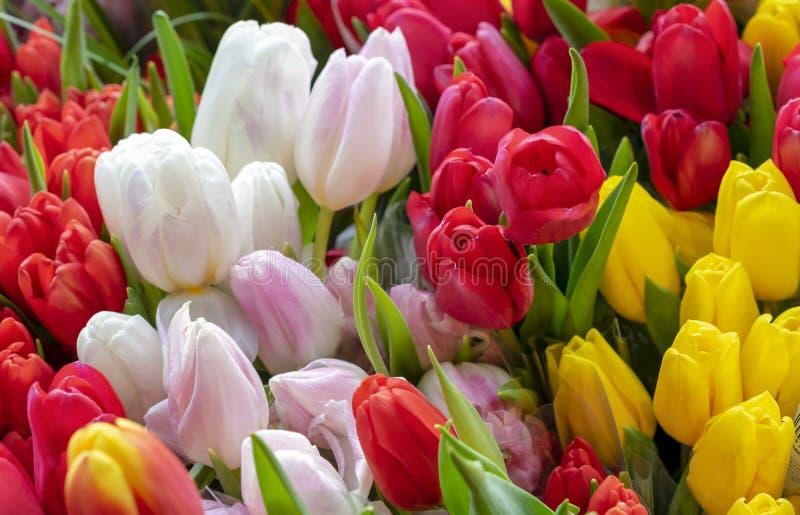 Tulipes colorées dans une fenêtre de fleuriste images libres de droits