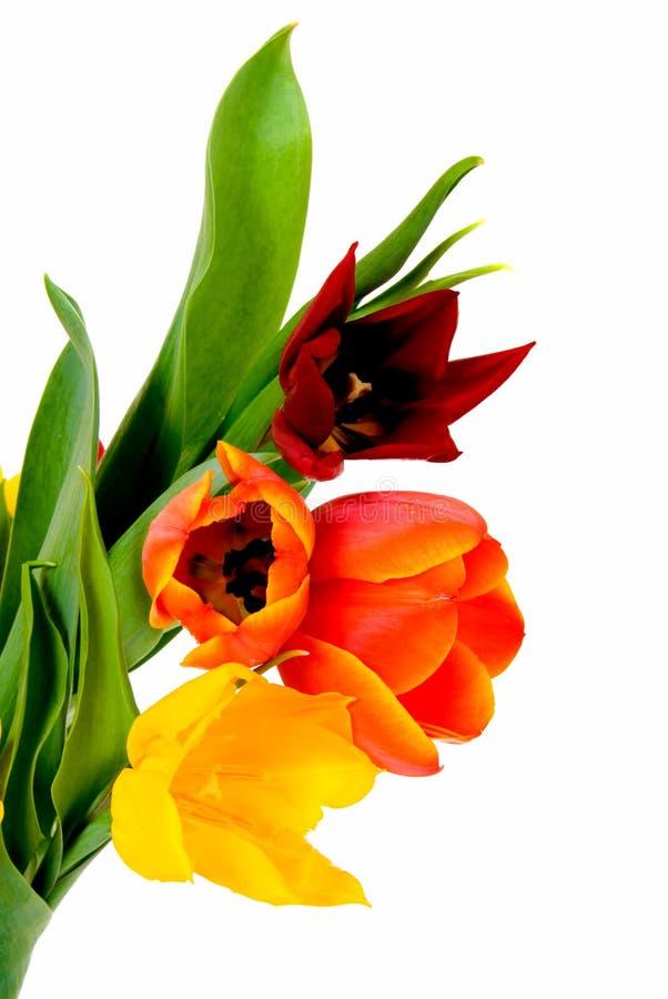 Tulipes Colorées De Pâques Image libre de droits