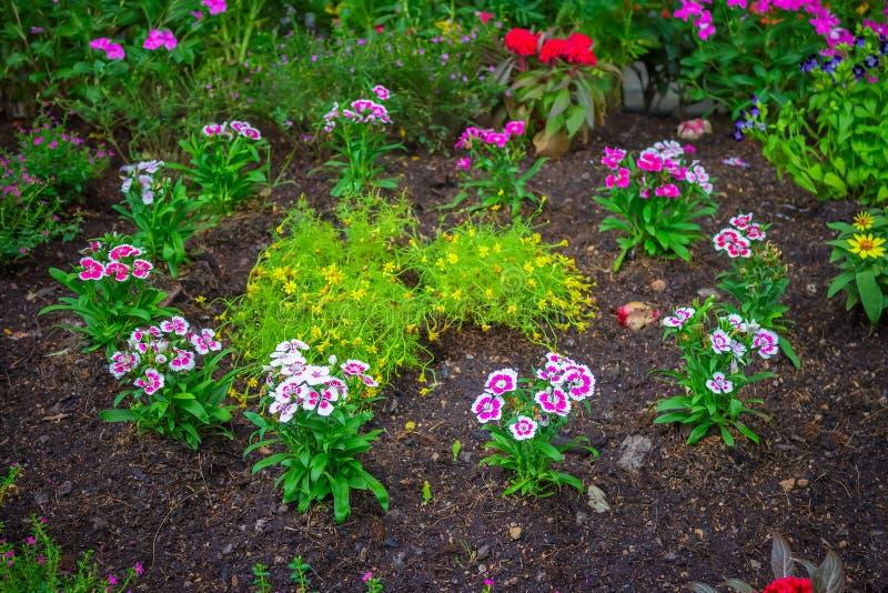 Tulipes colorées en stationnement images libres de droits