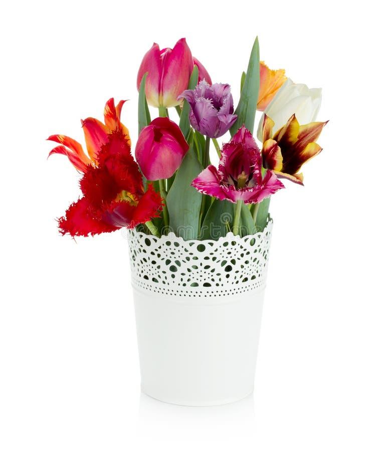 Tulipes colorées multi dans le flowerpot photographie stock