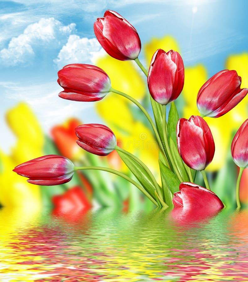 Tulipes contre le ciel bleu avec des nuages images libres de droits