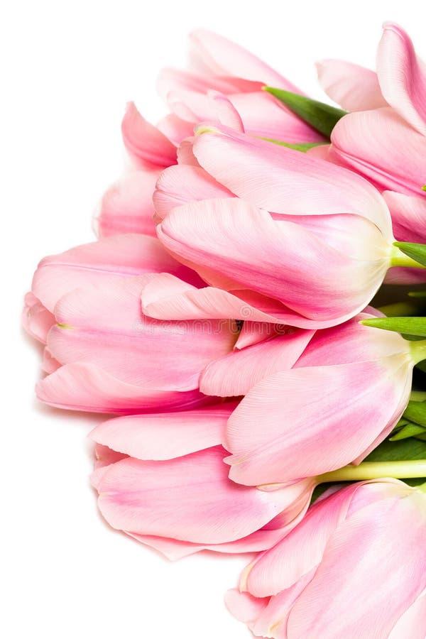 Tulipes d'isolement sur le blanc photo stock