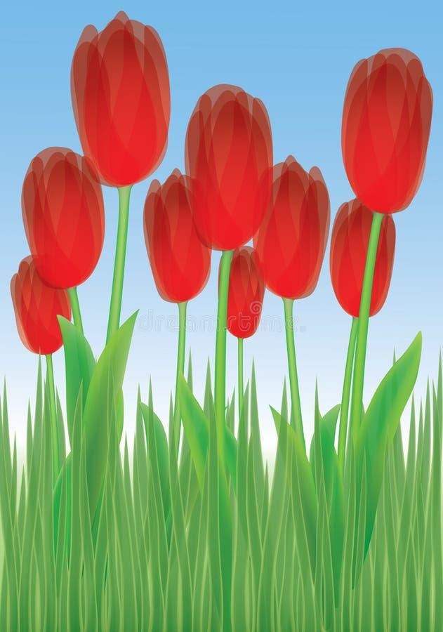 Tulipes dans l'herbe illustration stock