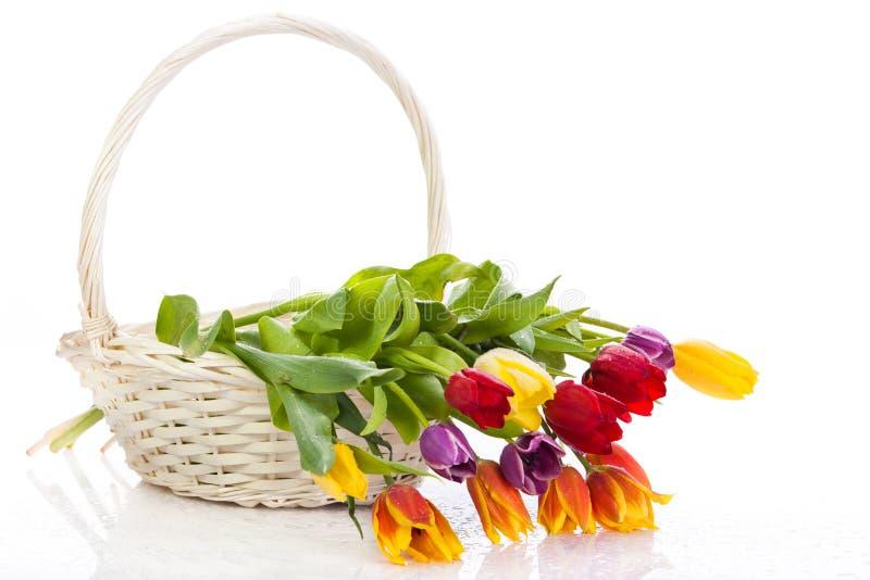 Tulipes dans le panier d'isolement sur le fond blanc couleurs photographie stock