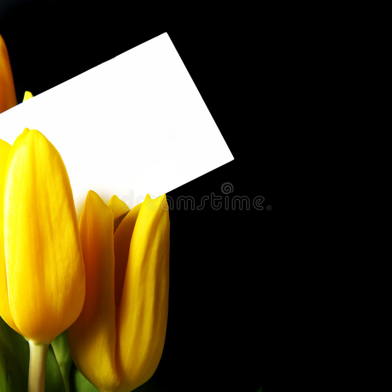 tulipes de carte vierge image stock