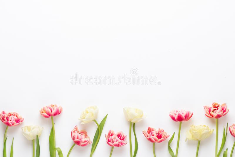 Tulipes de fleurs de ressort sur le fond de couleurs en pastel Rétro illustration du cru style photographie stock libre de droits