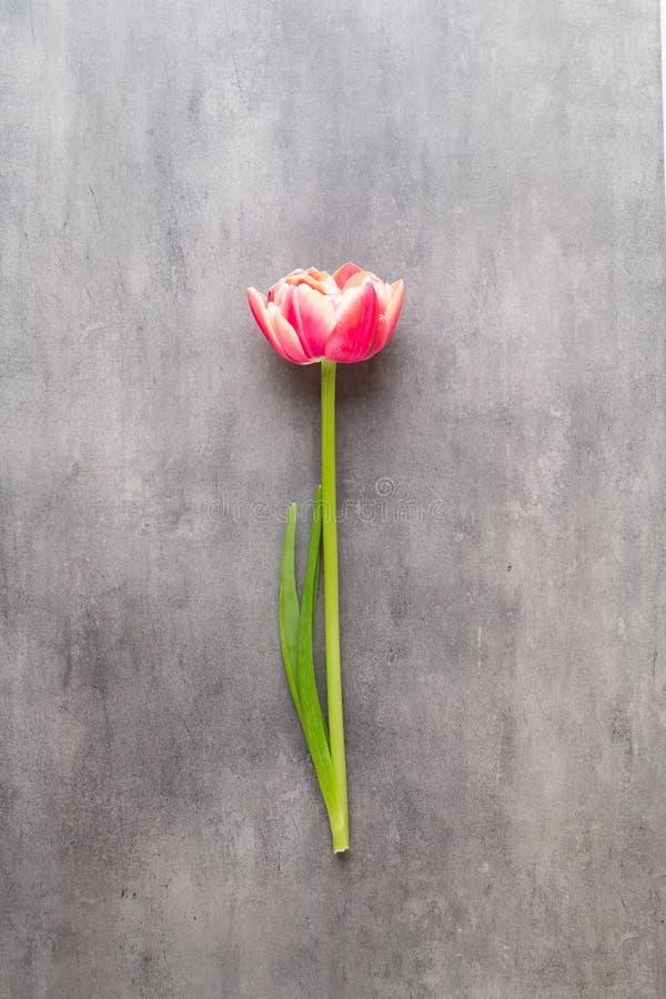 Tulipes de fleurs de ressort sur le fond de couleurs en pastel R?tro illustration du cru style images stock