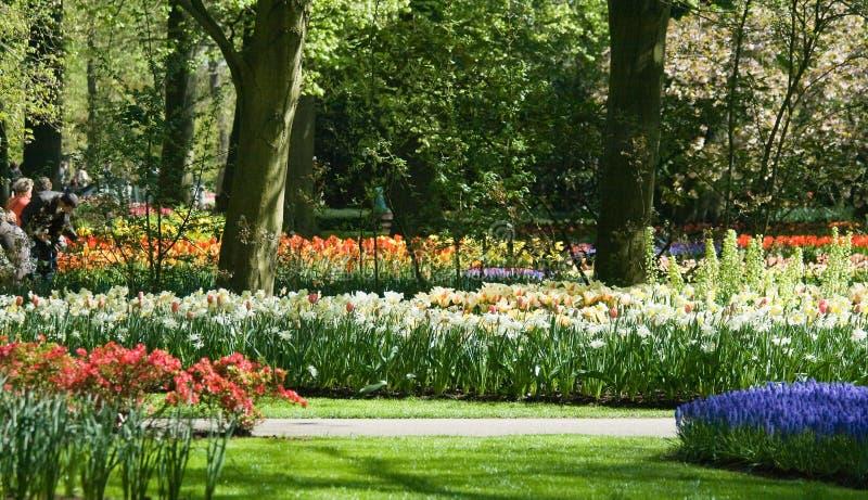 tulipes de floraison de jonquilles photographie stock libre de droits