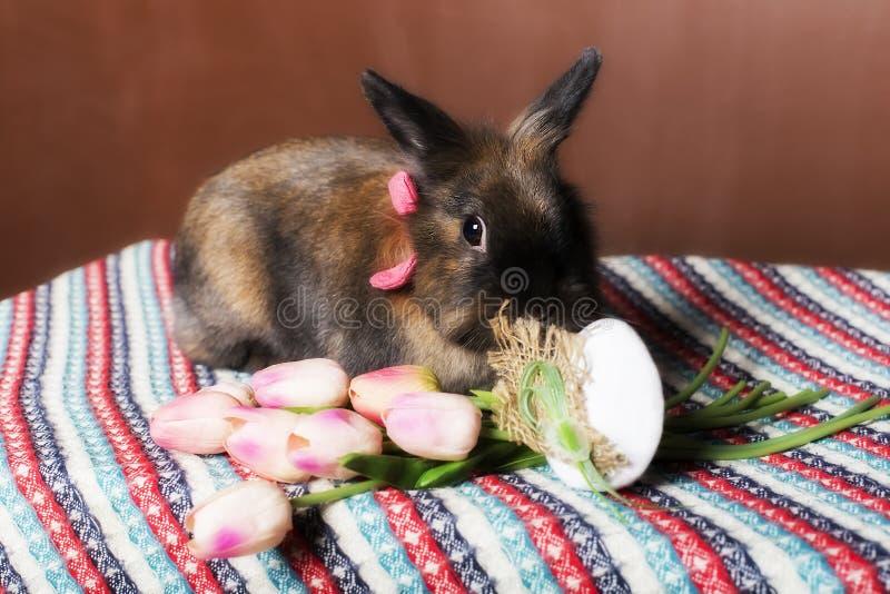 Tulipes de lapin de Pâques image stock
