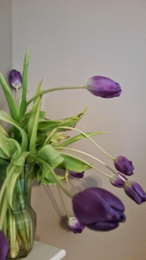 Tulipes de prière photos libres de droits