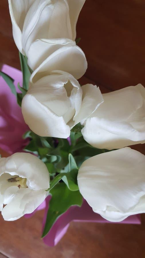 Tulipes de ressort images libres de droits