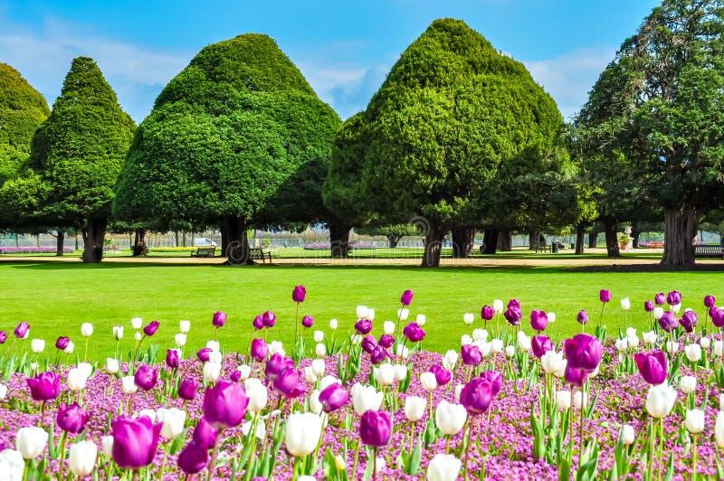 Tulipes de ressort dans le jardin de Hampton Court, Londres, R-U photographie stock