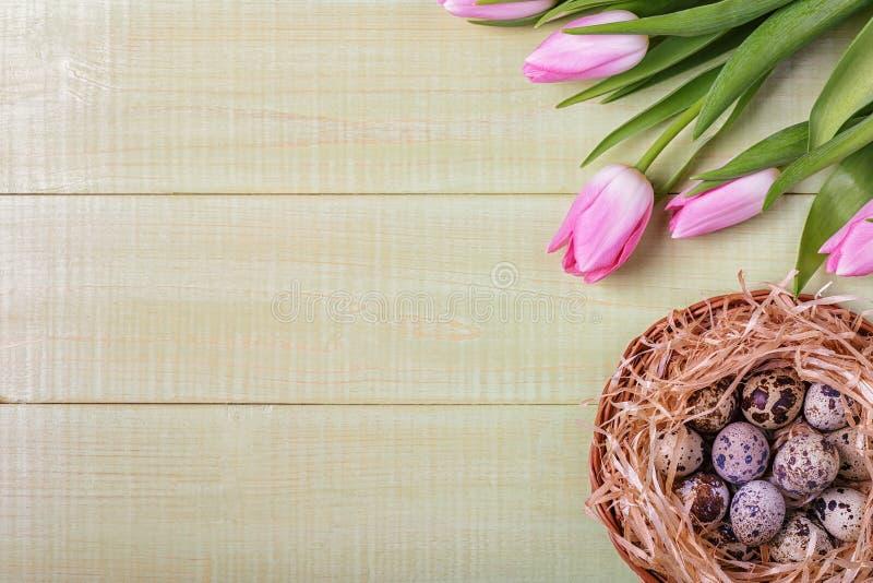Tulipes de rose de fond de Pâques sur la table en bois, oeufs de caille, nid photographie stock