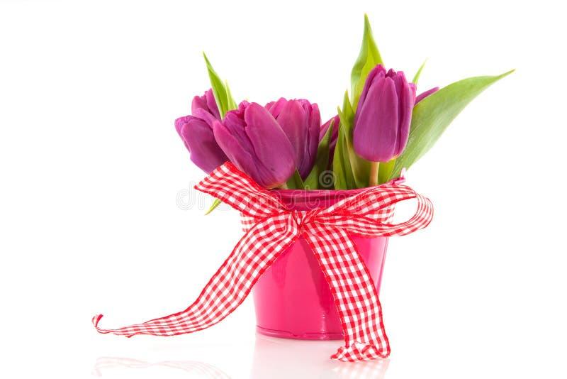 Tulipes de source photographie stock libre de droits