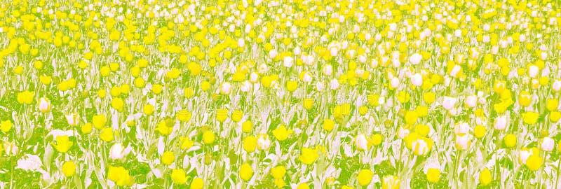 Tulipes, dessinant, couleurs en pastel, fleurs, bannière illustration stock