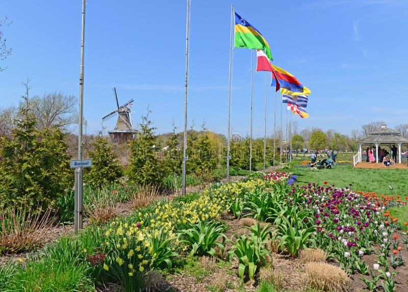 Tulipes en fleur chez la Hollande, Michigan Tulip Festival photographie stock libre de droits