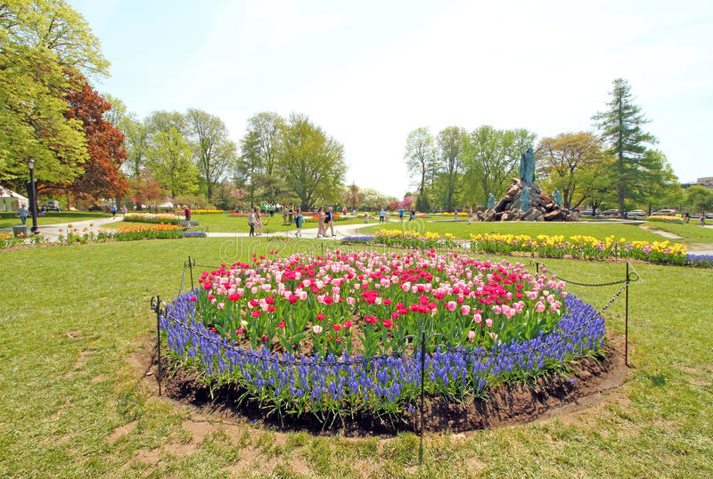 Tulipes en parc, Tulip Festival, Albany NY photos libres de droits