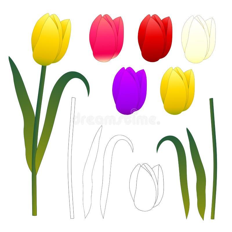 Tulipes et contour blancs pourpres rouge-rose jaunes Illustration de vecteur D'isolement sur le fond blanc illustration stock