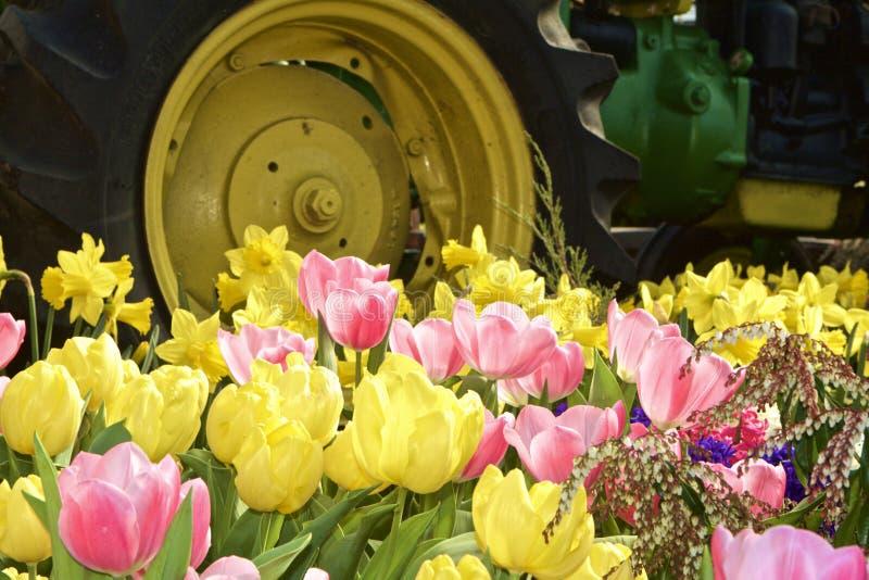 Tulipes et tracteurs photos libres de droits