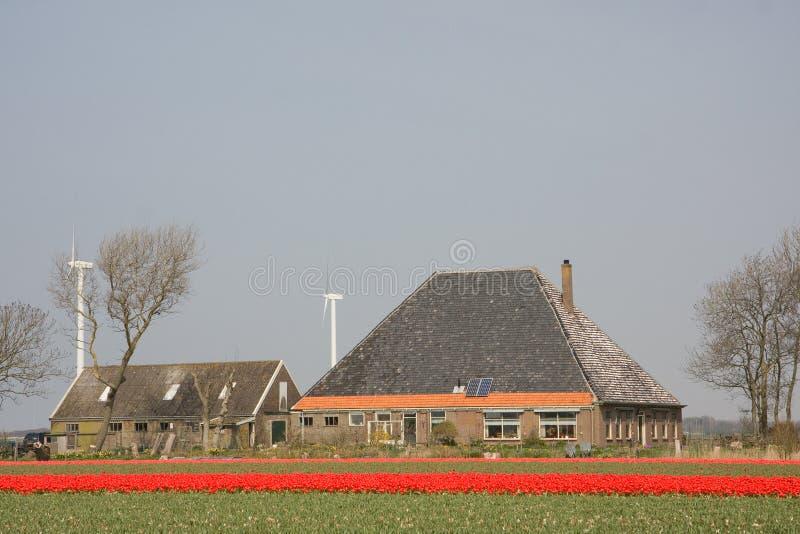 Tulipes et une ferme photo stock