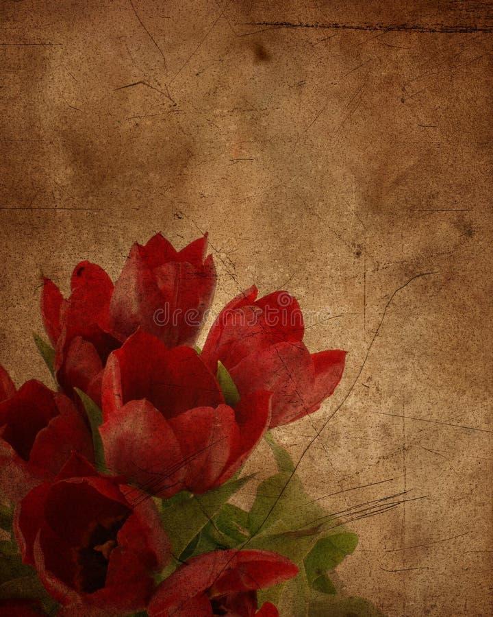 Tulipes grunges illustration stock