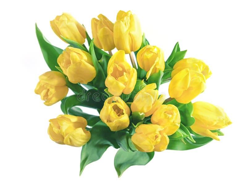 Tulipes jaunes d'isolement photos stock