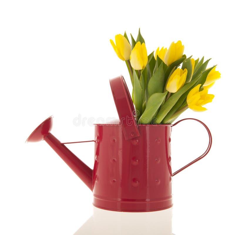Tulipes jaunes dans la boîte d'arrosage photographie stock libre de droits