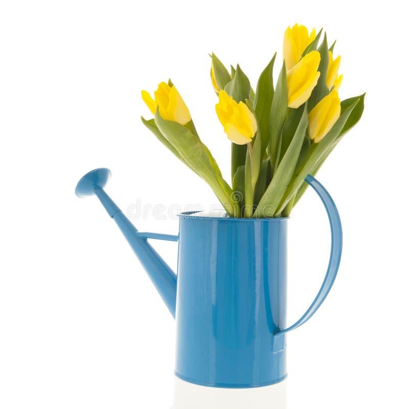 Tulipes jaunes dans la boîte d'arrosage photo libre de droits