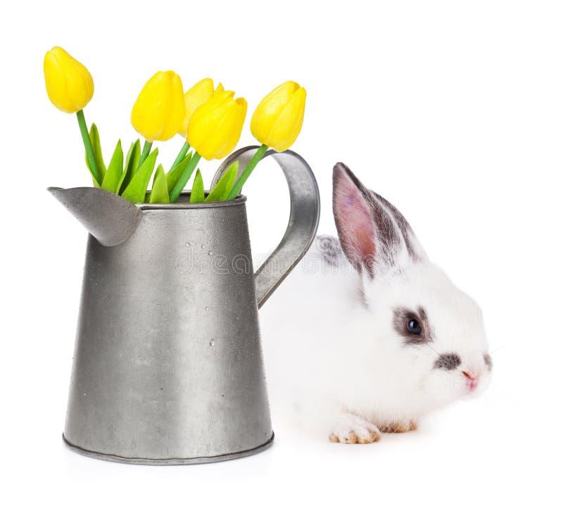 Tulipes jaunes dans la boîte d'arrosage et le lapin de Pâques photographie stock libre de droits