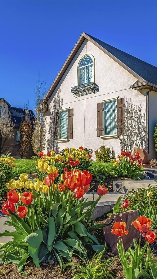 Tulipes jaunes et oranges verticales rayant une voie qui mène à l'entrée d'une maison photos stock
