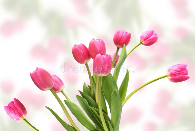 Tulipes roses images libres de droits