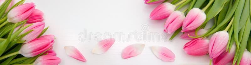 Tulipes roses d'isolement sur le fond en bois blanc Fond de c?l?brations photo libre de droits