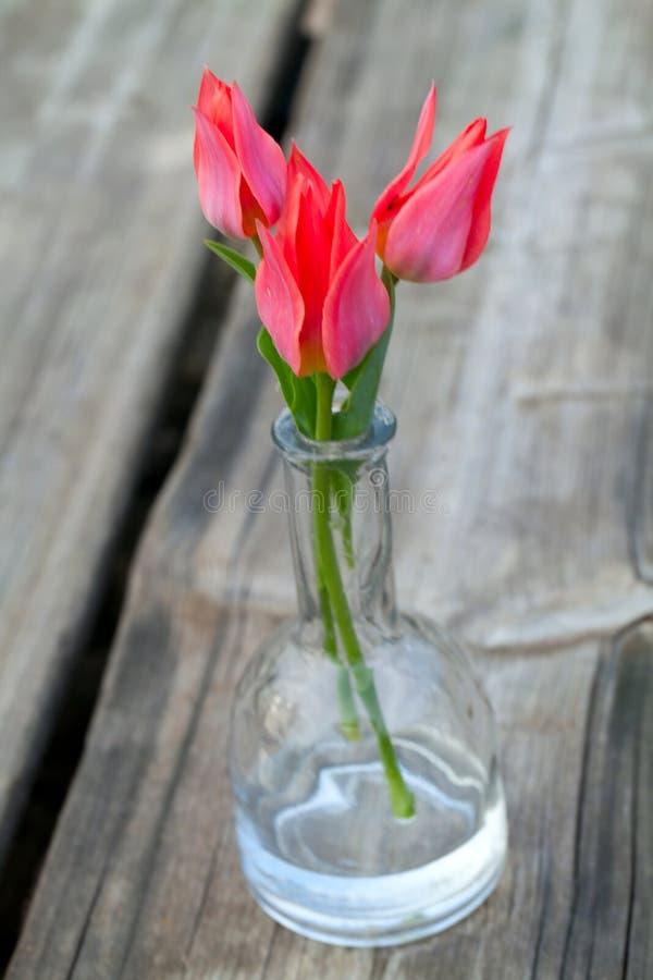 Tulipes roses dans le vase en verre photo libre de droits