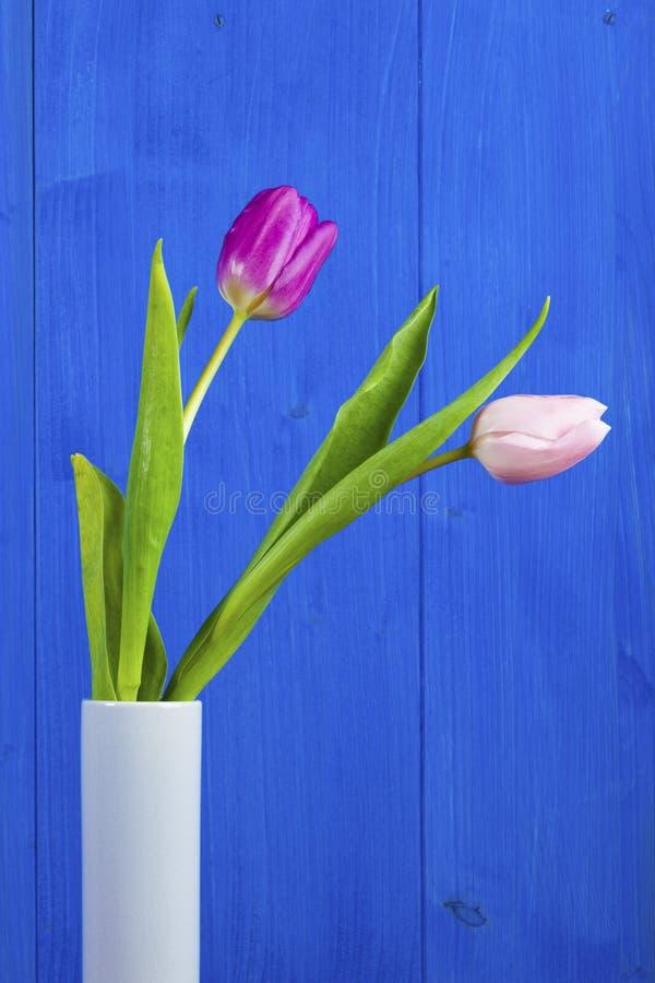 Tulipes roses et pourpres dans le vase sur le fond en bois bleu photographie stock libre de droits