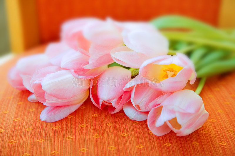 Tulipes roses - France image stock