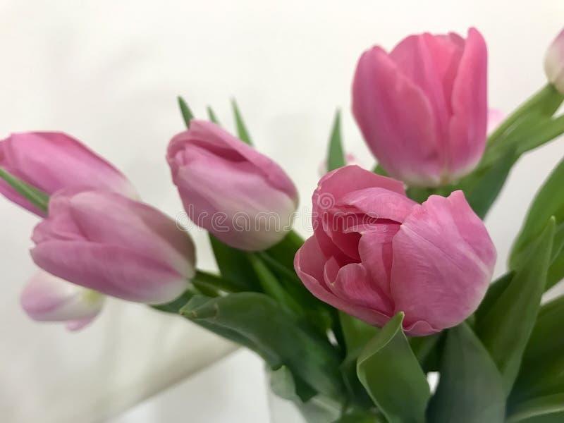 Tulipes roses le jour du ` s de Valentine pour votre aimé image libre de droits