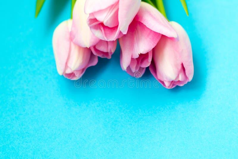 Tulipes roses sur le fond bleu Configuration plate, vue supérieure Fond de Valentines photographie stock libre de droits