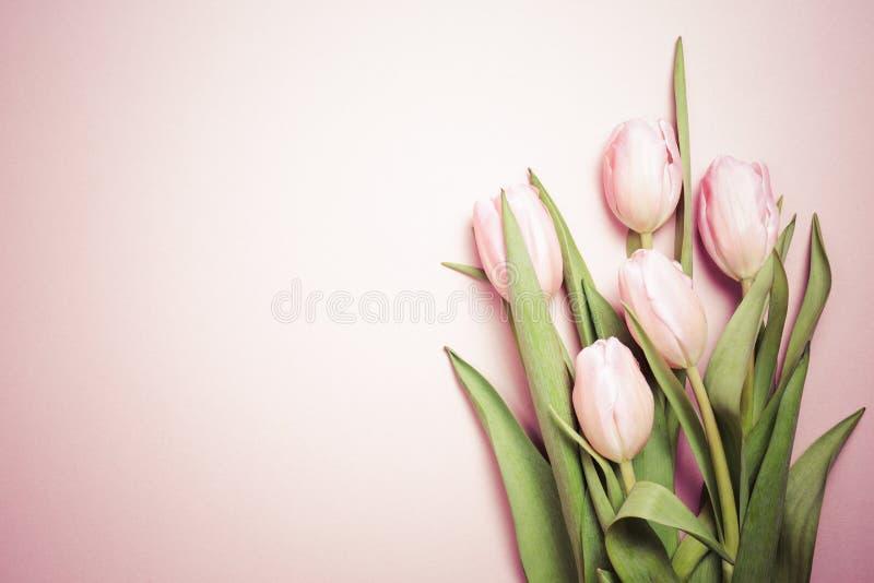 Tulipes roses sur le fond rose Configuration plate, vue supérieure valenti images stock