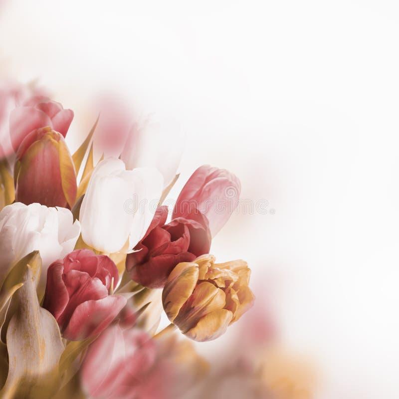 Tulipes rouges avec le vert photographie stock