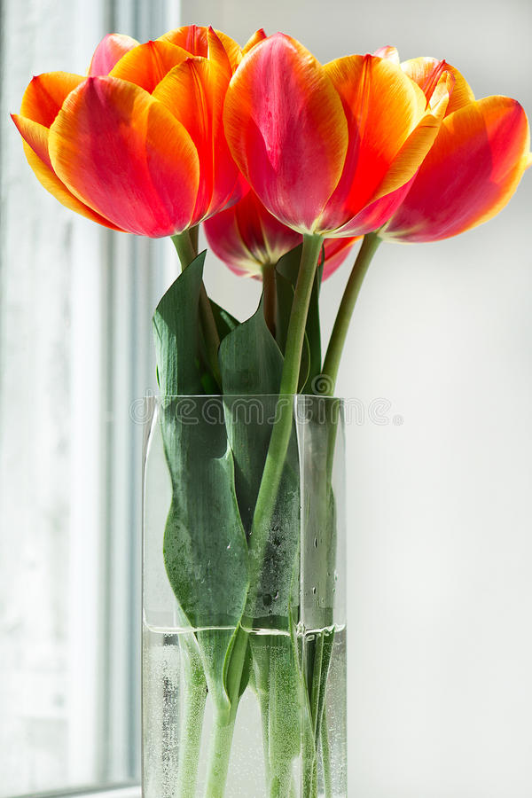 Tulipes rouges dans un vase images stock