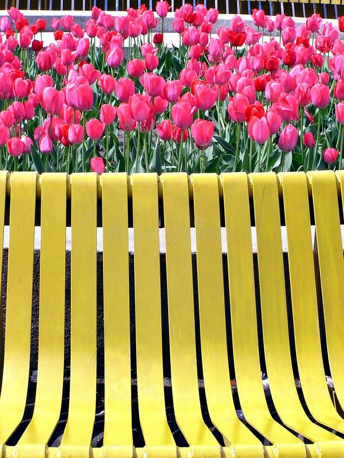 Tulipes rouges et banc jaune images stock
