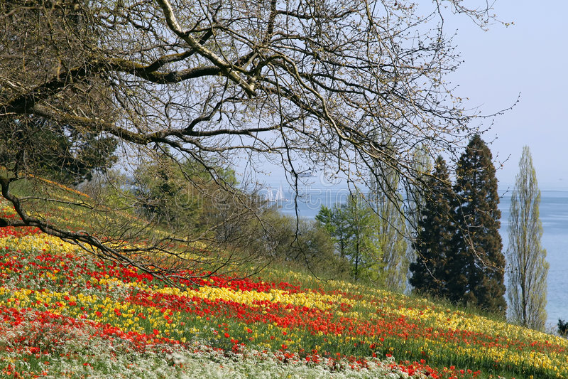 Tulipes rouges et jaunes dans l'herbe photographie stock libre de droits